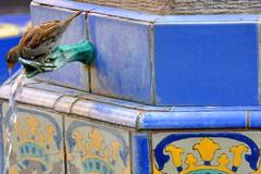 House of Hospitality (AlexJ (aalj26)) Tags: california park ca blue usa bird water gua nikon unitedstates sandiego unitedstatesofamerica pssaro exposition jorge eua alexander balboa azulejo fonte estadosunidos d90 alexj houseofhospitality aalj26 panamacalifornia alexanderjorge carletonwinslow