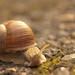 129. Mr. Snail