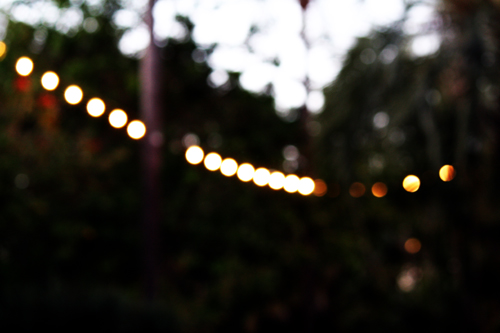 Zoo Light Bokeh