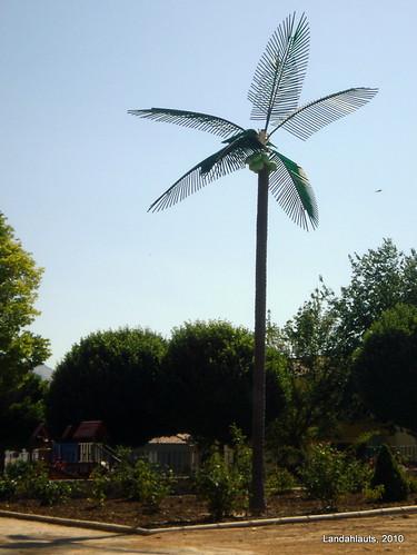 Palmera Farola II