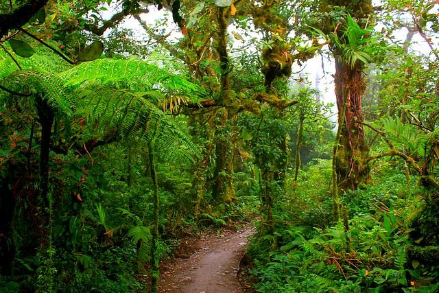 trail 1 c