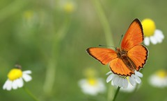 butterfly orange (RoYaLHigHnEsS1) Tags: summer flower canon butterfly insect