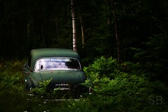 Memories of Green (Studiobaker) Tags: park wood trees roof shadow reflection tree green window car forest dark lost back woods rust automobile glow shadows rear memories deep rusty first curvy glen reflect chrome final shade doom end trunk reflective vehicle dodge destination gloom parked forever ferns curve roofline coronet shady 1949 cures shaded 4door studiobaker