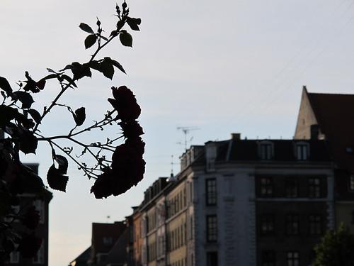 City Streets - Copenhagen, Denmark