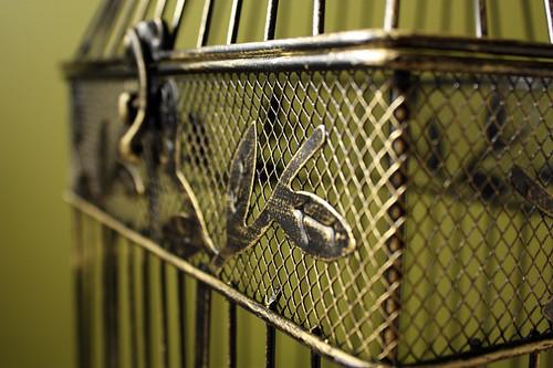 Bird cage02