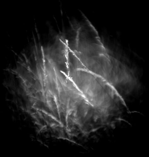 Grasses (swirling)