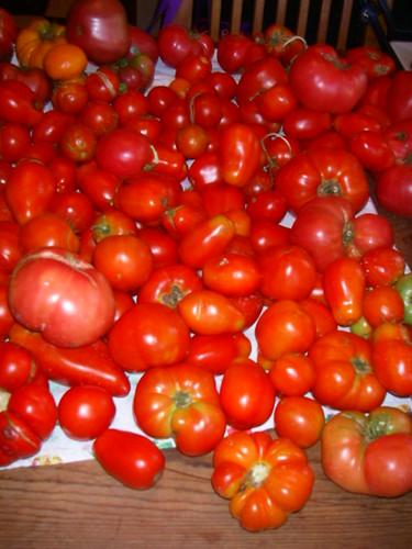 varieties of tomatoes. mix varieties of tomatoes