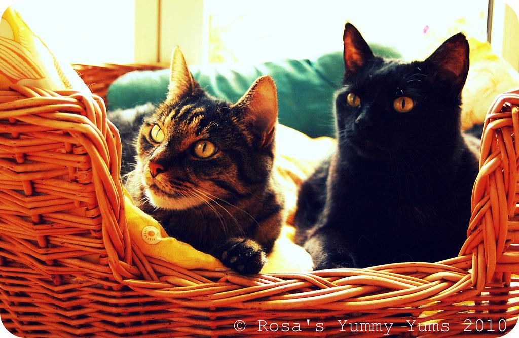 Mumu & Kiki 1.2 bis