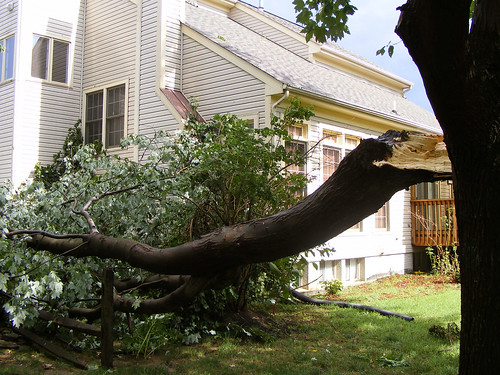 Big Tree Fell On Our Neighbors' House