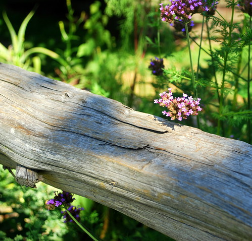 Watsons Farm fence with flower