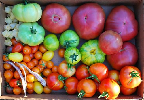 August Harvest 3
