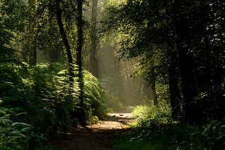 forrest morning walk  * explore * by dewollewei