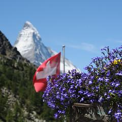 view from the Brghs Grnsee (Toni_V) Tags: flowers mountains alps square landscape schweiz switzerland dof suisse bokeh zermatt matterhorn alpen wallis valais d300 5018 grnsee flickraward toniv dsc2205 brghs