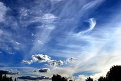Wow (Just a Prairie Boy) Tags: sky calgary clouds wow evening nikon wind picasa july treetops alberta 2010 photoimpact d60