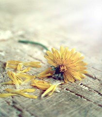 (FotoRita [Allstar maniac]) Tags: life italy rome flower roma macro colors digital canon micro daisy fiore myfavourites canoneos350d margherita byfotorita