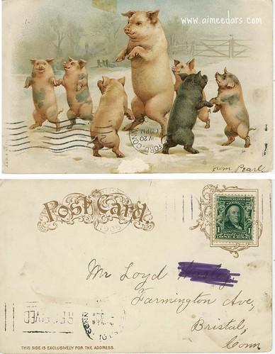 Dancing Pigs (1905)