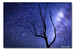 Star Burst Sky Spin (Matthew Stewart | Photographer) Tags: trees sky cold tree night way stars dead photography spin australia qld queensland shooting milky startrails cunninghamhighway lakemoogerah