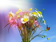 (Alin B.) Tags: blue summer sky sun sunlight flower nature daisy sunbeam sunray alinb