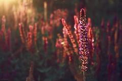 Sweet Memories (seyed mostafa zamani) Tags: life camera new light color colour macro tree art love nature colors beautiful look canon eos nice colorful asia iran sweet bokeh memories arts dreams iranian colourful boke زندگي زيبا ايران باغ سبز غروب رنگ زرد عشق طبيعت شهرستان هنر آذربايجان رنگي انعكاس ايراني eos450d دشت 450d ماكرو صفا بوكي رنگارنگ افتاب marand شرقي عاشقانه رنگها سكوت رويا مرند آذربايجانشرقي زيبايي مفهومي سورئال سورئالیسم ارامش بوكه فليكري اذربايجان باغباني زردي natvryalyst ناتورئاليست خاطرها colorfulmemoriesofyourdreamcityofeastazarbaijan iranmarand