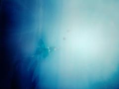 One Summer dream before the dawn / 胡蝶の夢 (miu37) Tags: blue butterfly artlibre focusschmocus nikond700 imageofanalogue miu37