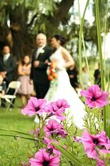 Caio e Priscila (willjessie) Tags: wedding toronto canada love amor amour casamento amore lamour canad