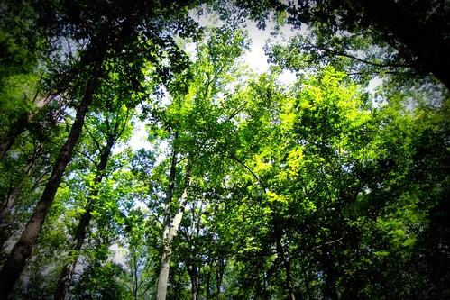 Burke Lake trees