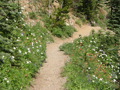 Marmot Pass trail and flowers.