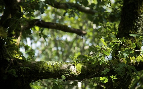 Sunlight On The Branch