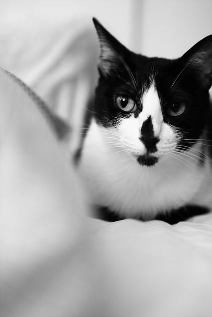 窩在我的枕頭上