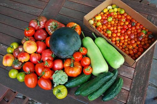 Mid August Tomato Harvest