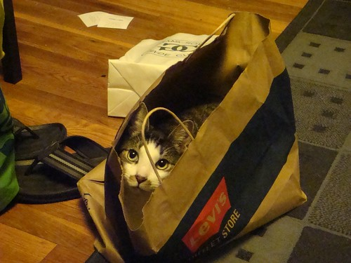Kitten in a Bag!