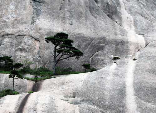 l92 - Trees on Lotus Cliffs