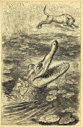 Canis et Crocodilus