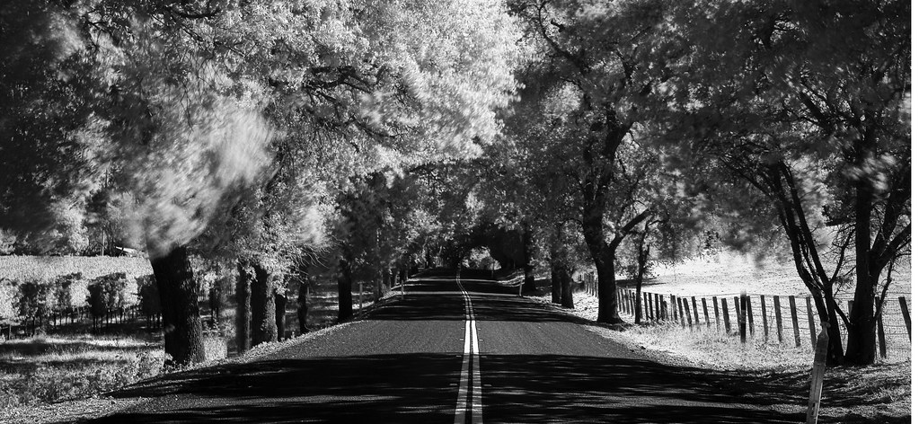 Infrared Study 1