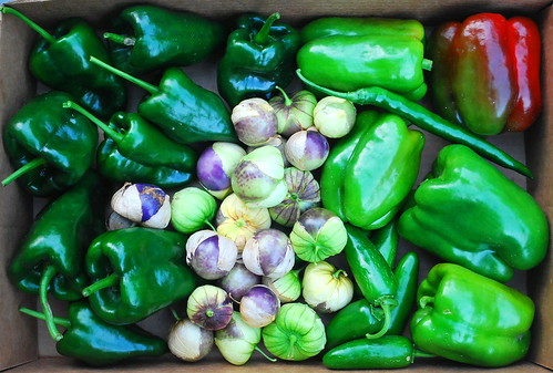 Peppers and Tomatillo Harvest