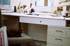 () Tags: film cat office iso400 agfa canonftb
