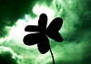 Your Damn Luck (Delire Lucide) Tags: canon powershot a720is macro shot clover trebol green sky cielo verde clouds nubes contrast contraste silueta silhouette bad good luck mala buena suerte evelyn laoun delire lucide
