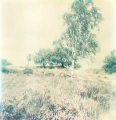 sx-70 (Eva van Oosten) Tags: holland landscape polaroid blurry nederland thenetherlands bleach landschap uitgebleekt evavanoosten