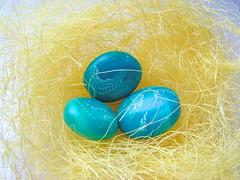 голубые как яйца дрозда