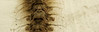 Bicho raro (Anahi Temporelli) Tags: macro texture textura bug insect skin olympus scales rare bicho hairs raro insecto piel escamas pelitos mju9000