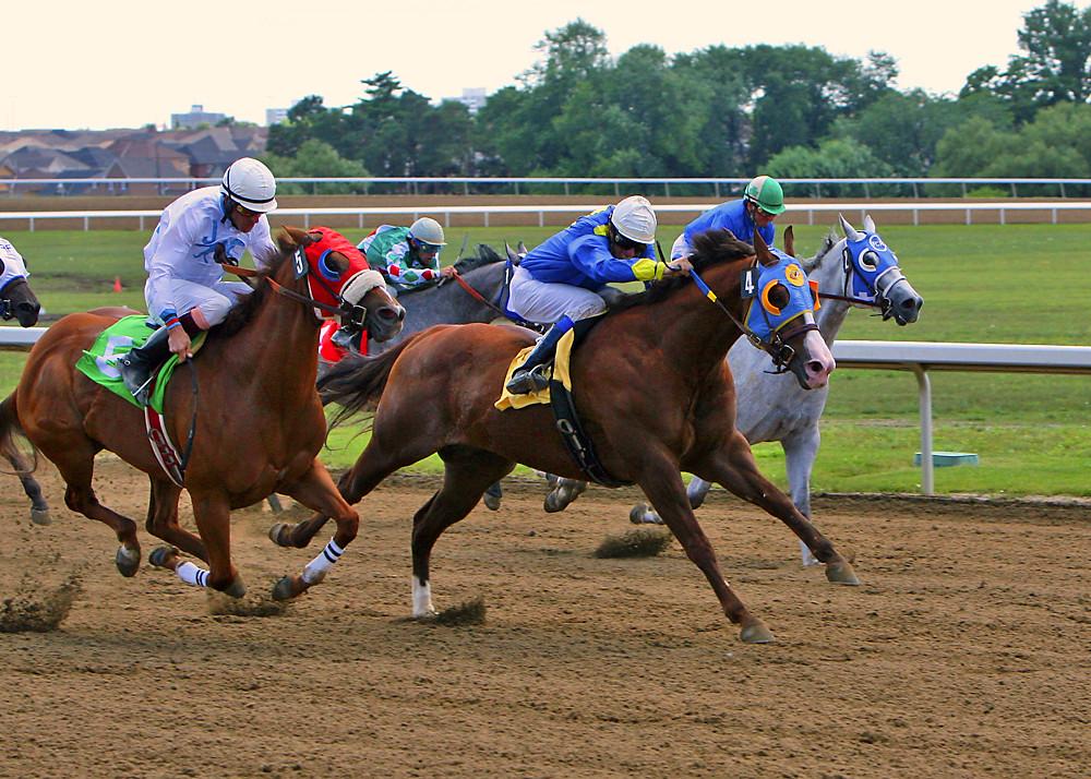 Quarter Horse  pferdede