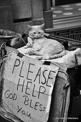 Homeless cat (Rafakoy) Tags: city bw white newyork black animal digital cat please manhattan homeless help nikond90 afsnikkor18105mmvr aldorafaelaltamirano rafaelaltamirano aldoraltamirano