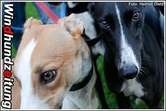 Bad Girls - Greyhounds: Cover Girl & Makeitupthesix