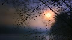 macro landscape dawn with the sun through the fog (czdistagon.com) Tags: morning light summer sky macro water zeiss landscape dawn dof bokeh explore distagon carlzzeiss voigtlandernokton58mmf14sl aleksandrmatveev czdistagon czdistagoncom