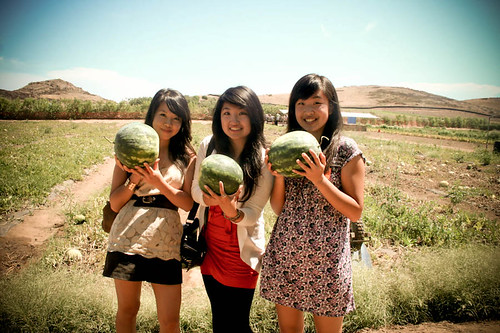 Watermelons we picked!