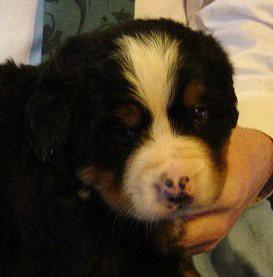 星星's puppy