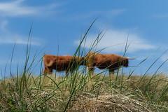 Shhhhhhh....... (eric zijn fotoos) Tags: animal holland nature natuur dier noordholland sonyrxiii sonyrx10111 sonyrx10m3 fauna nederland