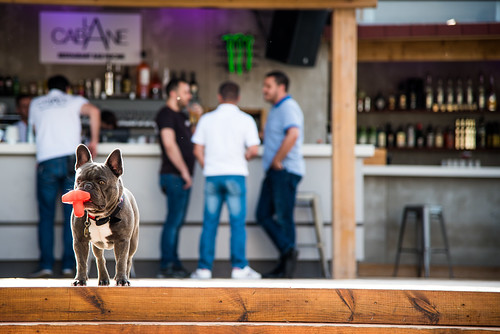 French Bulldog invites to La Cabane