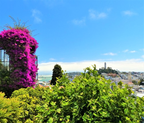 Photo Gallery Of Lombard Street (San Francisco) In San