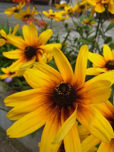 RICOH GXR  -Flower -
